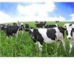 761119 vacas