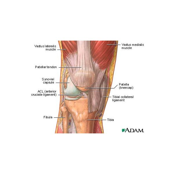 Learn about the Causes of Body Joint Pain