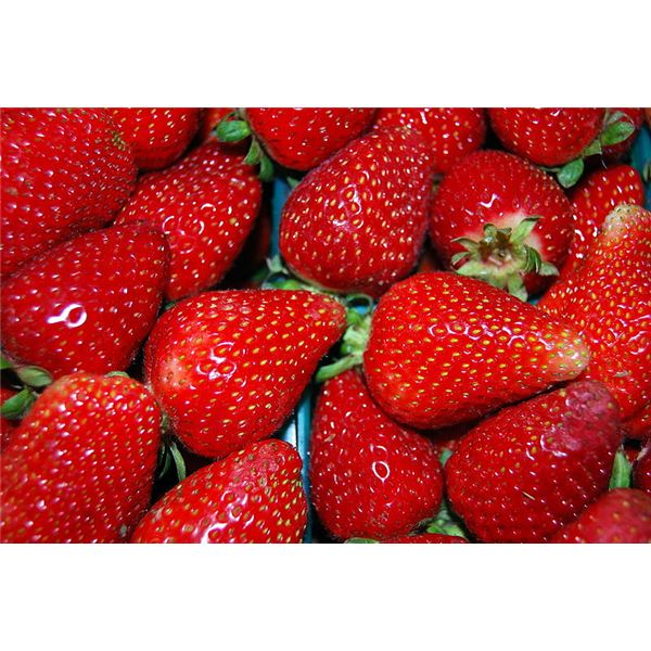 Strawberry Allergy Signs & Causes: Could You Be Allergic?