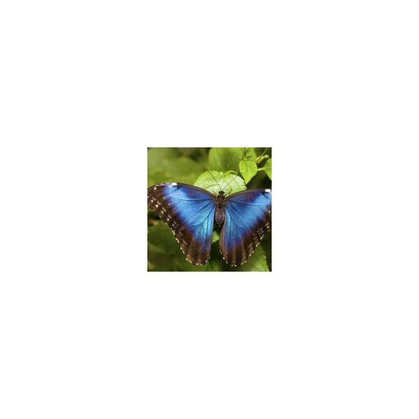 PowerPoint & Multimedia Lesson Plan on the Life Cycle of the Butterfly for Grades 4-6