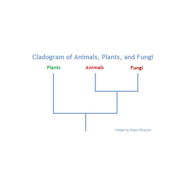 Animals, Plants, and Fungi: Phylogeny Tree