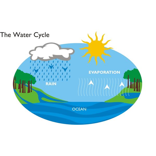 Water Cycle Science Project