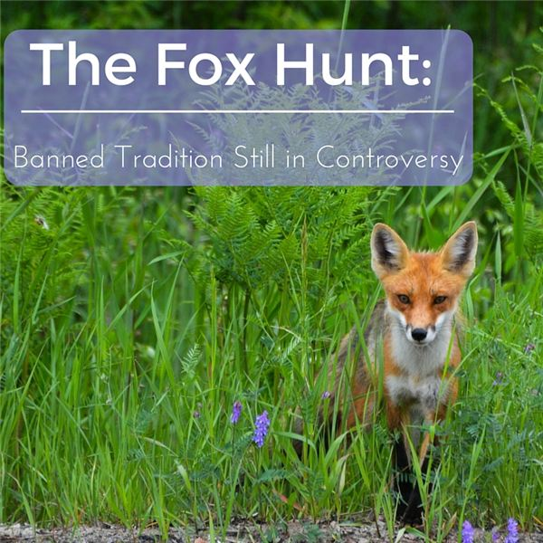 Fox Hunting: The History, Tradition and Controversy of this Longstanding Sport