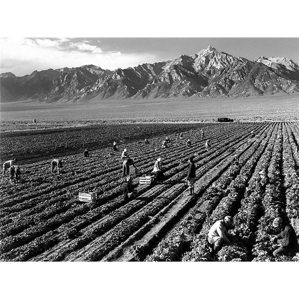 Farm Workers and Mt. Williamson