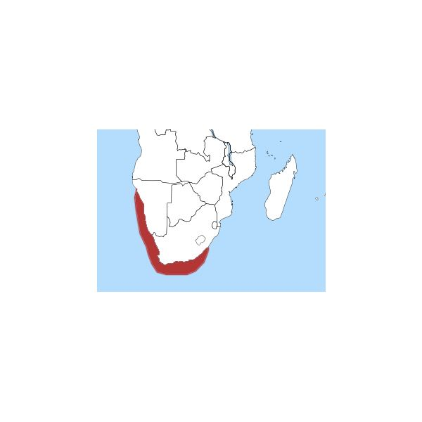 African Penguin Distribution Map