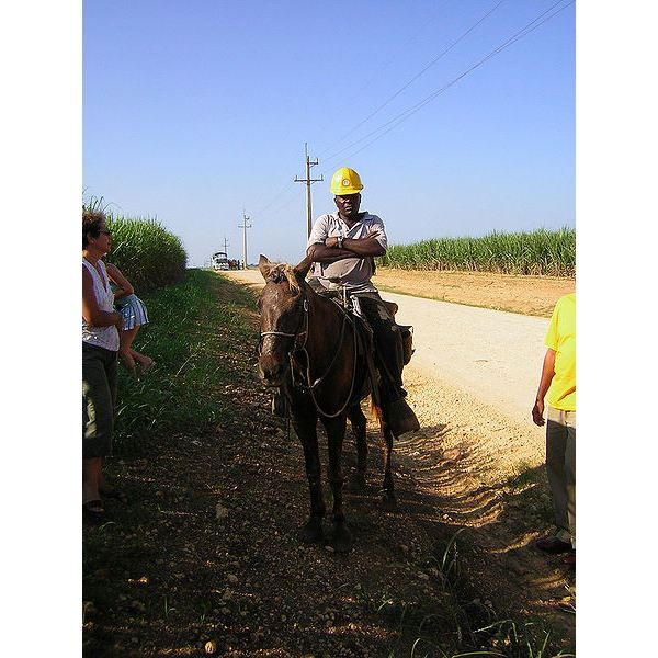 450px-Supervisor by horse.jpg A supervisor for the farm workers on the sugar cane fields