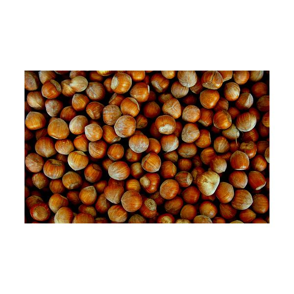 What are the Health Benefits of Hazelnuts? Are They Good for You?
