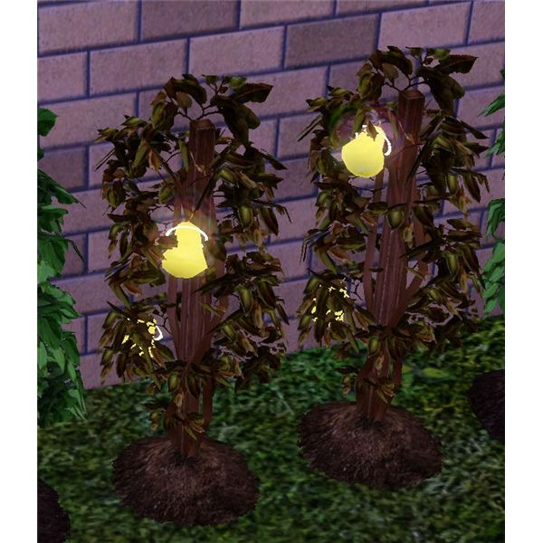 how to grow plants in sims 3
