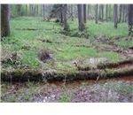 barren wildwoods