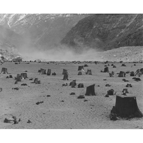 Black and White Photographers: Field of Stumps from the Hetch Hetchy Reservoir