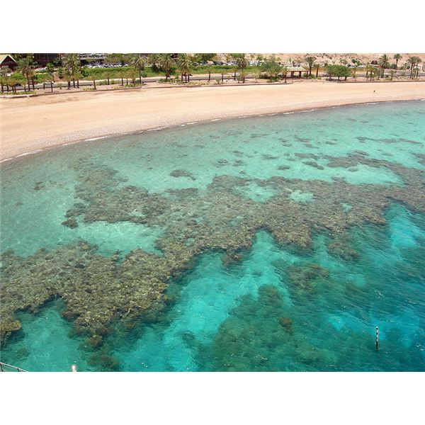 Unusual Facts About The Coral Reef: Unraveling The Mystery