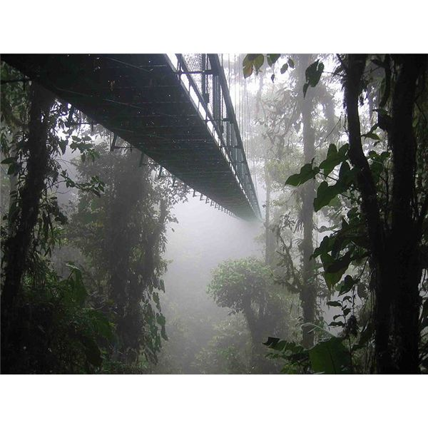 800px-Costa rica santa elena skywalk