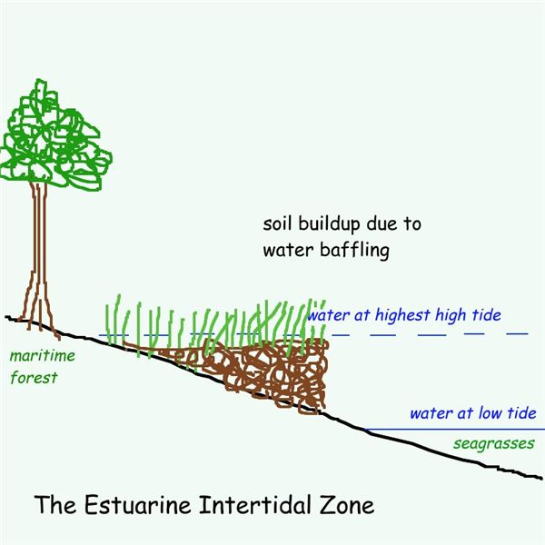 Water Baffling: Soil Buildup For Tidal Creeks
