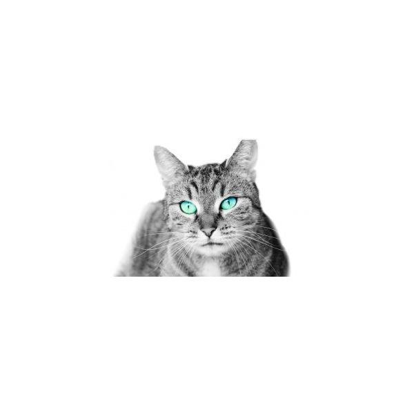 Cat with background removed