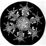 Dendritic Snowflake