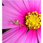 Flower Picture with Spider