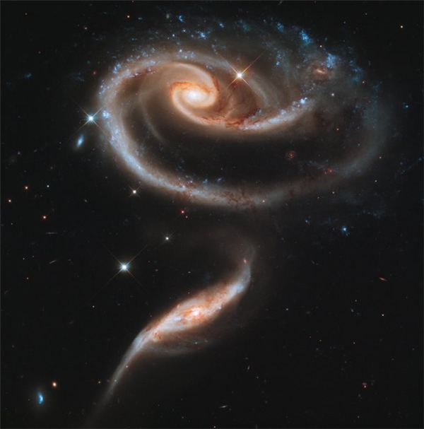 A Rose of Distant Galaxies