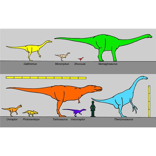 What Is The Best Way to Classify Dinosaurs?