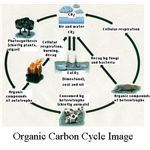 Organic Carbon Cycle Image