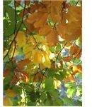 Autumn lighting