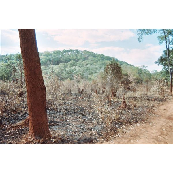 an example of a recovering area of slash-and-burn agriculture in Zambia