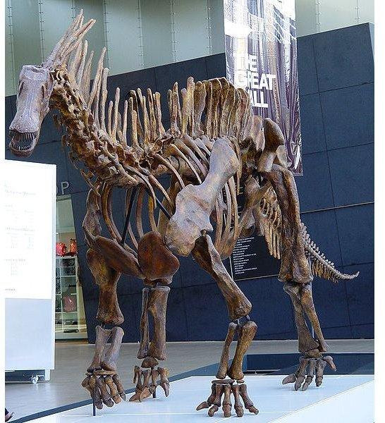 524px-Dino amargasaurus.cretaceous period