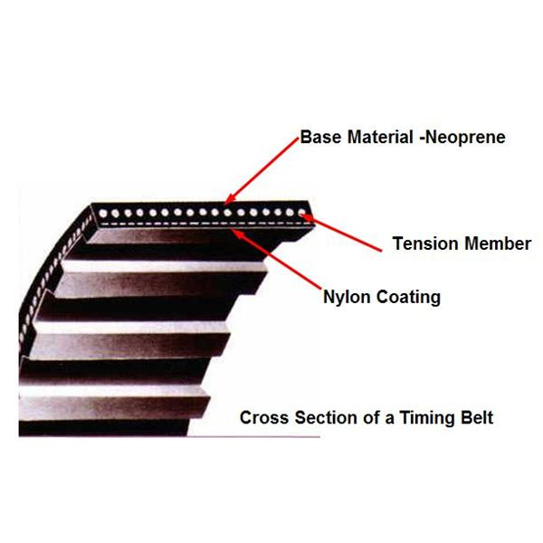 Cross section of timing belt