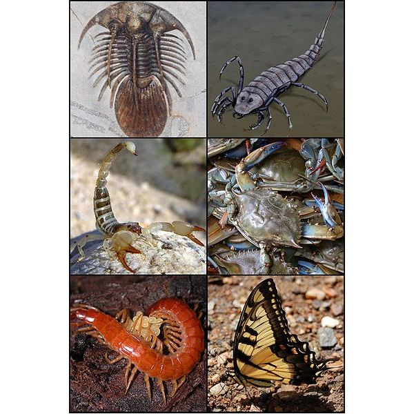 The Ecological Importance of Arthropods - Know the Economic Benefits of Diversity