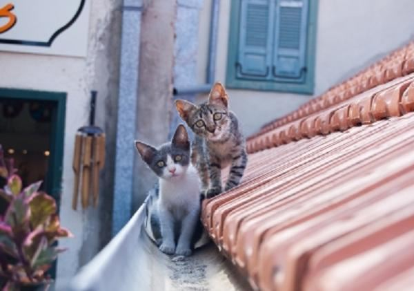 Kittens On A Roof