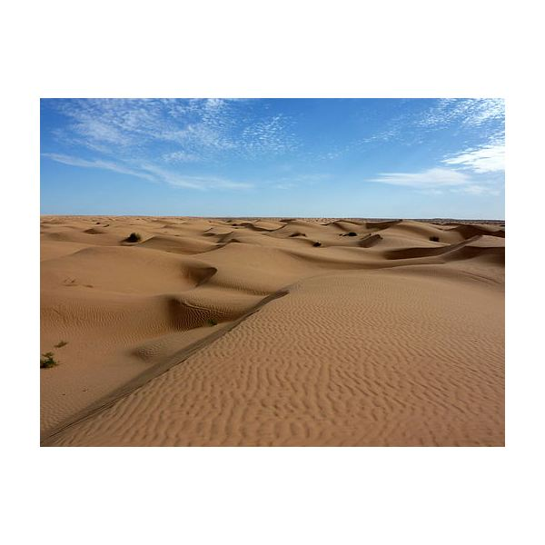 What Is the Largest Desert in the World? The Sahara or Antarctica?
