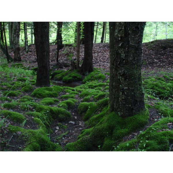 Image of a Moss-Covered Area
