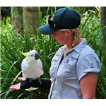 685px-Cacatua galerita -Australia Zoo, Queensland -with zoo keeper-8a