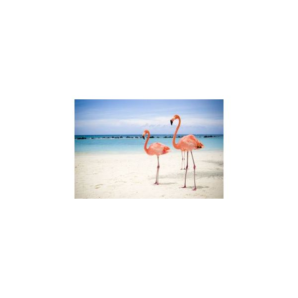 September is National Pink Flamingo Month!