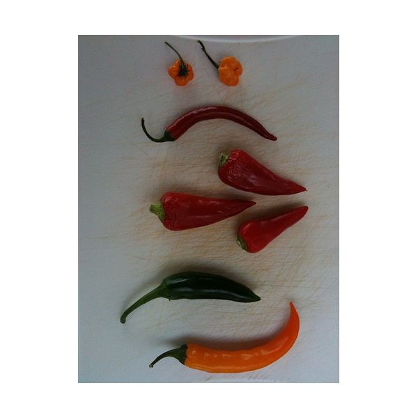 different chili peppers