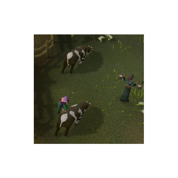 Milking Cows in Runescape