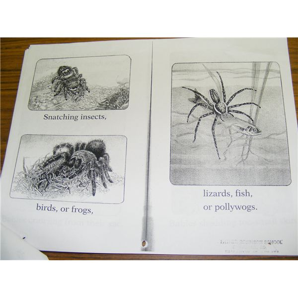 Spider drawings