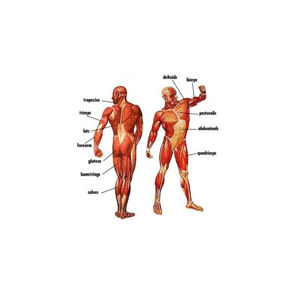 Exercising and Using Different Muscle Groups In Your Workout