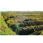 800px-Saterland mechanical peat digging 1982