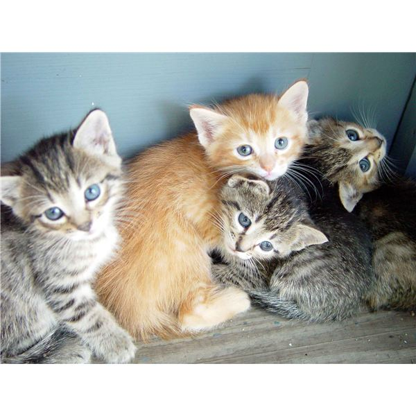 How to Manage Cat Allergies: Tips for Reducing Allergy Symptoms Associated With Exposure to Cats