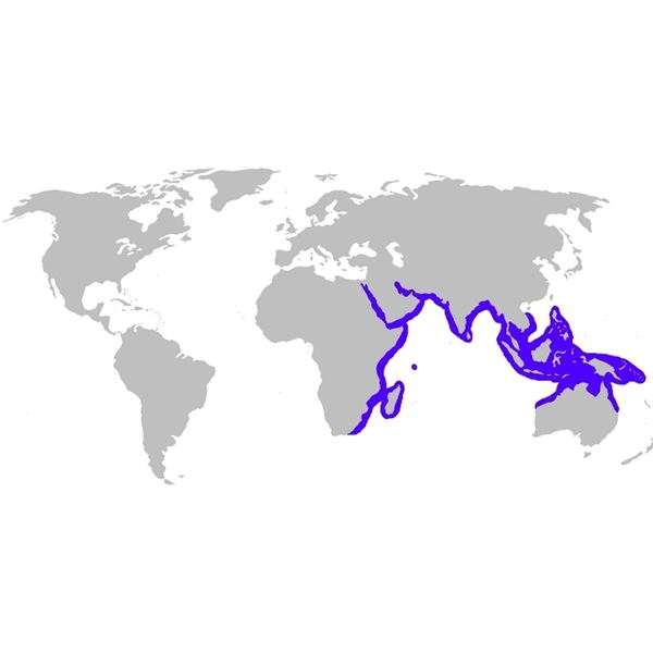 Range of the Blue Spotted Ray