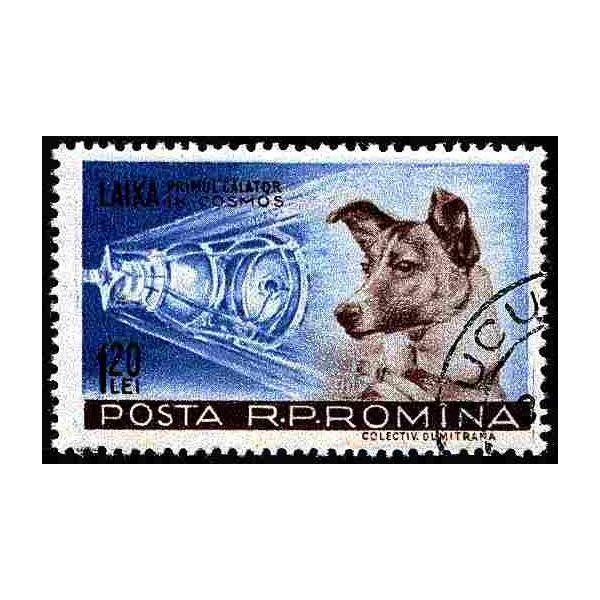 A Few Facts about the Russian Space Dogs Including Laika, the Most Famous