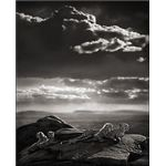 Black and White Photographers: Cheetah & Cubs Lying on Rock