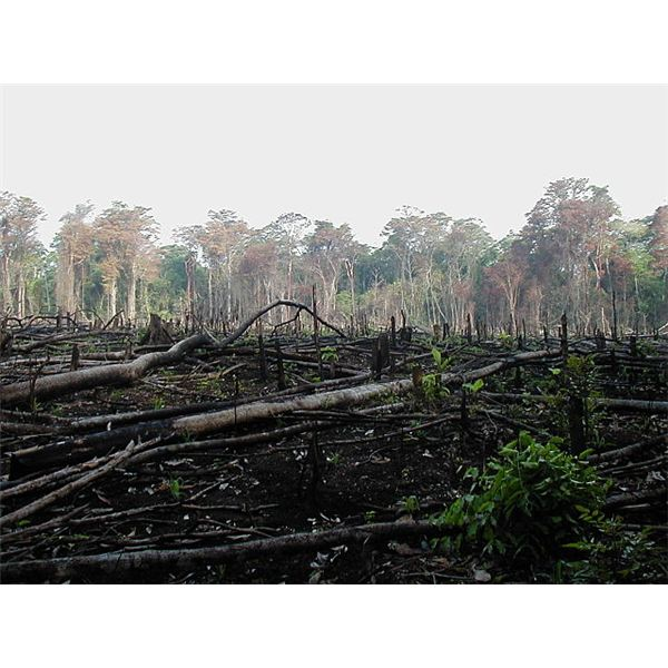 Burning of forest for agriculture in southern Mexico