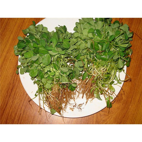 Benefits of Fenugreek Leaves (Kasturi Methi)
