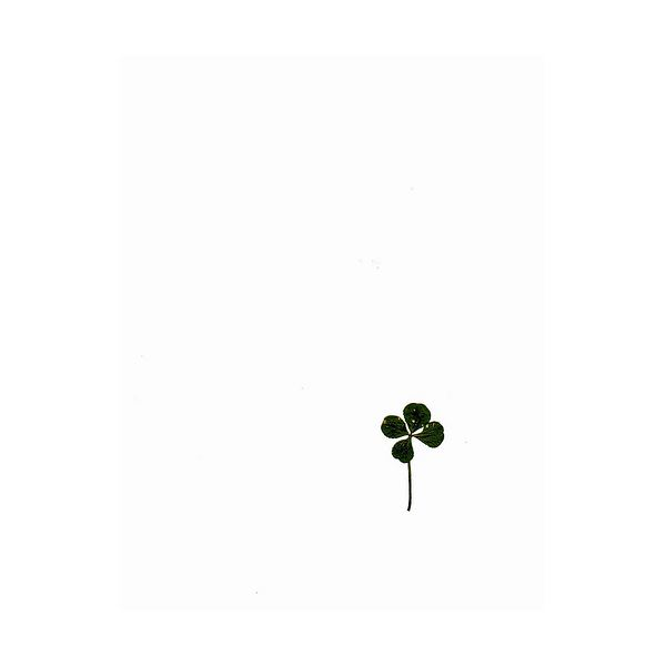 Four leaf clovers symbolize luck and good fortune.