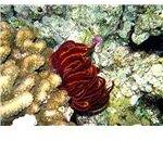 Corals and Seastar
