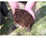 repurpose kitchen scraps into compost for fertile soil