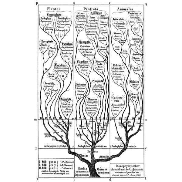 Example of Phylogenetic Tree