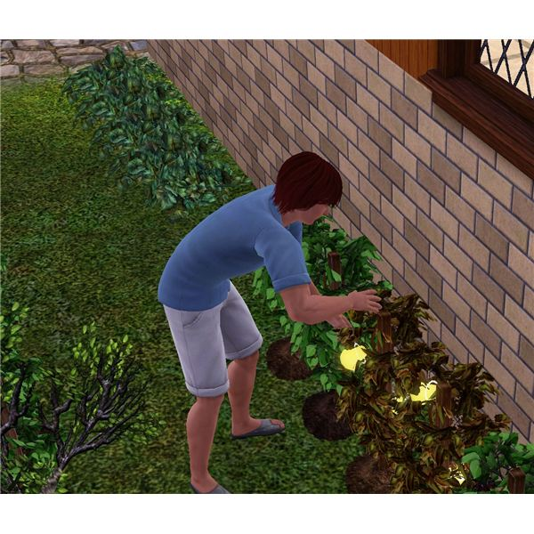 The Sims 3 Life Fruit 2