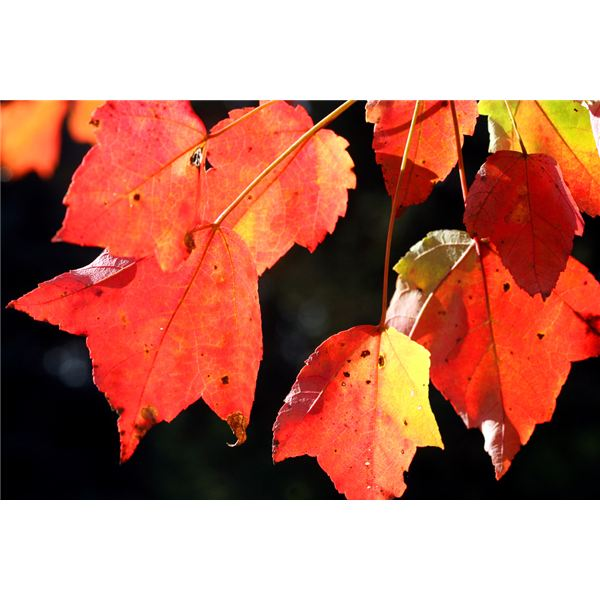 Three Autumn Math Activities Your Students Will Love